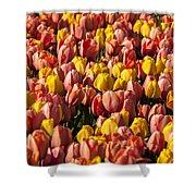 Dutch Tulips Second Shoot Of 2015 Part 9 Shower Curtain