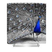 Dutchess Shower Curtain
