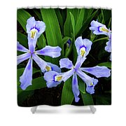 Dwarf Crested Iris Shower Curtain