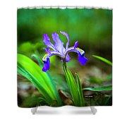 Dwarf Crested Iris Shower Curtain