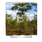 Dwarf Cypress Tree Shower Curtain