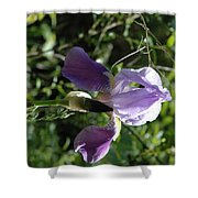 Dwarf Lake Iris Shower Curtain