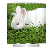 Dwarf White Bunny Spring Scene Shower Curtain
