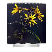 Each New Day Shower Curtain