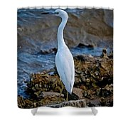 Eager Egret Shower Curtain
