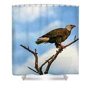Eagle And Blue Sky Shower Curtain