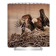 Bald Eagle And Eaglet In Nest Shower Curtain
