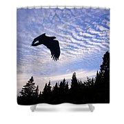 Eagle At Dawn Shower Curtain