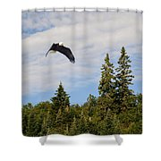 Eagle At Scott Brook Shower Curtain