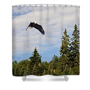 Eagle At Scott Brook II Shower Curtain