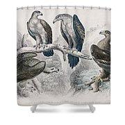 Eagle Birds Print Shower Curtain