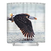 Eagle Catch Shower Curtain