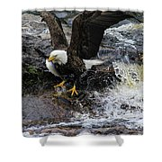 Eagle Catches Fish Shower Curtain