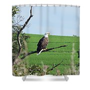 Bald Eagle Overlook Shower Curtain