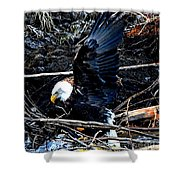 Eagle Getting Ready To Feed Shower Curtain