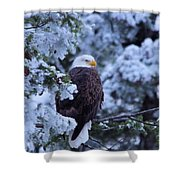 Eagle In A Frosted Tree Shower Curtain