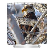 Eagle In A Tree Shower Curtain