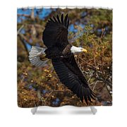 Eagle In Fall Shower Curtain