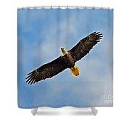 Eagle In Flight Shower Curtain