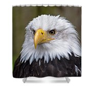 Eagle In Ketchikan Alaska Shower Curtain