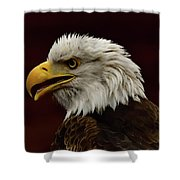 Eagle In Profile Shower Curtain