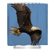 Eagle In Sunlight Shower Curtain