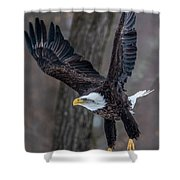 Eagle In The Forest Shower Curtain