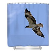 Eagle Lakes Park - Osprey In Flight With Sea Fish Meal Shower Curtain
