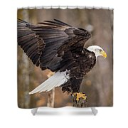 Eagle Landing On Perch Shower Curtain