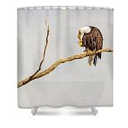 Eagle Nail Biting  Shower Curtain