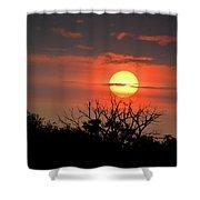 Eagle Nest Sunrise Shower Curtain