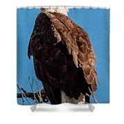 Eagle Of The Salt River Shower Curtain