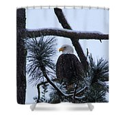 Eagle On A Frosted Limb Shower Curtain