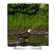 Eagle On A River Rock Shower Curtain