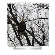 Eagle On Old Dump Road Shower Curtain