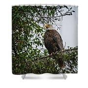 Eagle Feet Shower Curtain