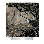 Eagle On The Nest, No. 3 Shower Curtain