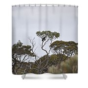 Eagle On The Nullarbor  Shower Curtain