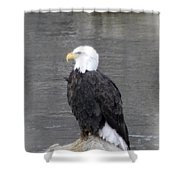 Eagle On The River Shower Curtain