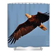 Eagle Over The Fox Shower Curtain