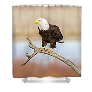 Eagle Overlooking Colorado River Shower Curtain
