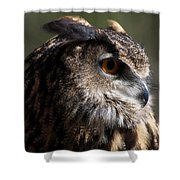 Eagle Owl 4 Shower Curtain