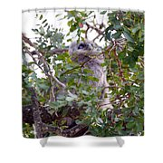 Eagle Owl Chick Shower Curtain