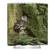 Eagle Owl In Forest Shower Curtain
