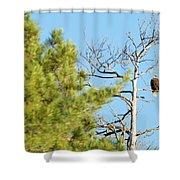 Eagle Perch Shower Curtain