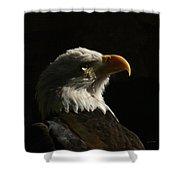 Eagle Profile 4 Shower Curtain