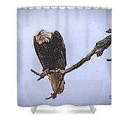 Eagle Searching Shower Curtain