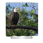 Eagle Series 13 Shower Curtain