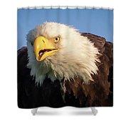 Eagle Stare 2 Shower Curtain