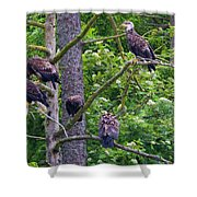 Eagle Tree Shower Curtain